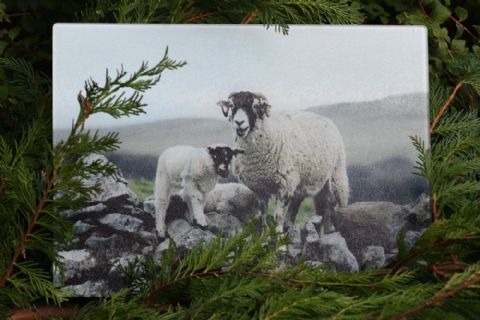 Swaledale Sheep on Wall Glass Chopping Board Large toughened glass